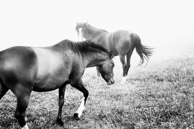 Regalar fotografía | Jorge Mier-Terán